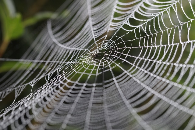 cobweb-449911_640